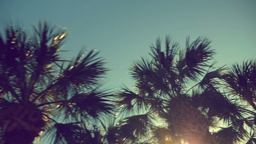 Driving through palm trees with sun beam. Vintage colors. Slow motion | Shutterstock HD Video #1006564927