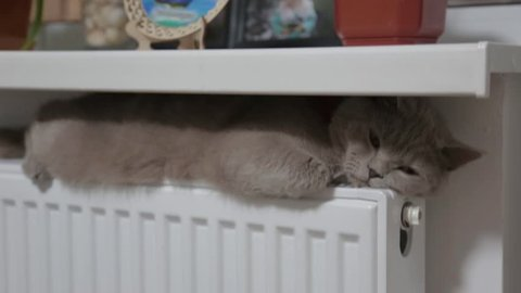 cat basking in the radiator, winter
