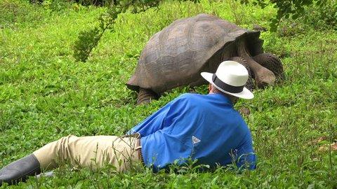 GALAPAGOS ISLANDS, ECUADOR - CIRCA 2010s - A tourist lies on the ground admiring a giant land tortoise in the Galapagos Islands, Ecuador.
