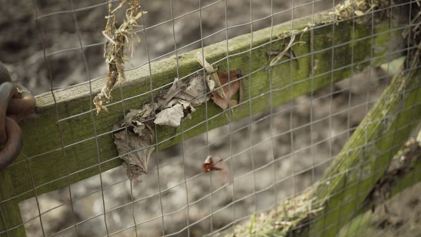 Wind Blowing Leaf Caught In Chain Link Fence Stock Footage Video ...