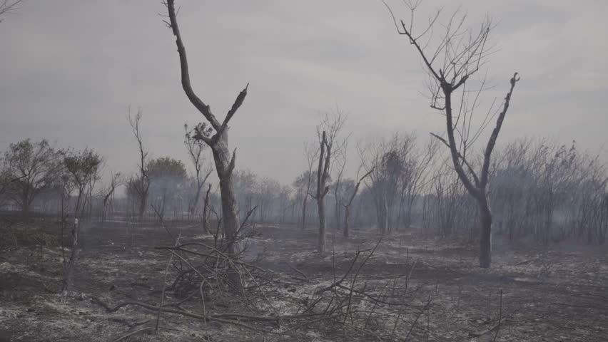Wildfire, burning trees, fields, smoke. Hot summer weather. #1006897717