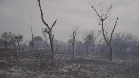 Wildfire, burning trees, fields, smoke. Hot summer weather.