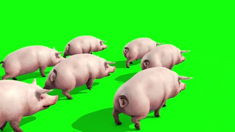 Group of Pigs Animals Farm Walk Green Screen Back 3D Renderings Animations