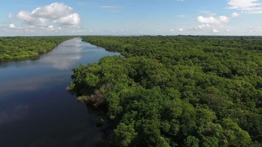 Aerial view of Anavilhanas, the biggest fluvial archipelago of the world, at Negro River, Amazon jungle, Novo Airão city, Amazonas, Brazil | Shutterstock HD Video #1007344147