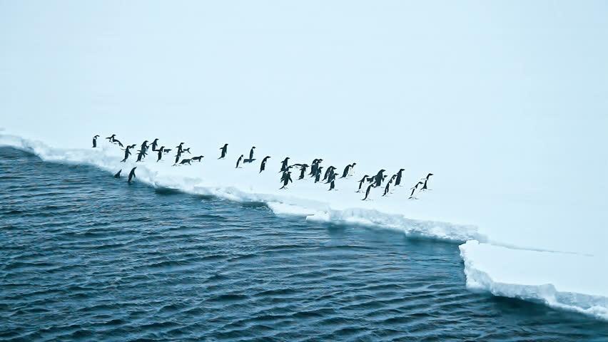 Group of cute Adelie penguins on snow field