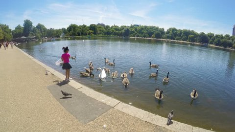 LONDON, ENGLAND - 17 July, 2017: Little happy girl feeding the swans and the ducks near pond in Hyde Park in London, England