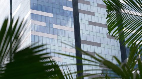 CLOSE UP: Rustling palm tree leaves obstruct view of high rising office building. Awesome contemporary glassy building windows shining brightly in metropolis. City center park located near skyscraper.