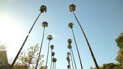Driving through Palm Trees on Beverly Drive in Los Angeles, California