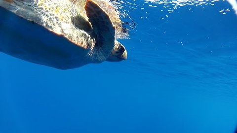 Sea Turtle swimming  in the Mediterranean.