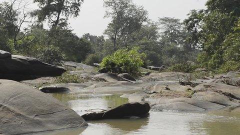 beautiful river National Park, India