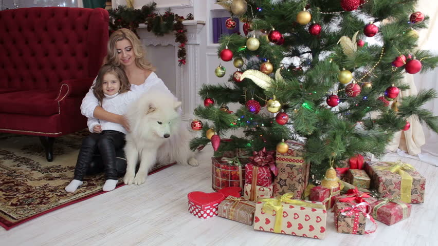Mom and daughter and big white fluffy dog near the decorated Christmas tree and boxes with gifts sitting on the floor of the house. Portrait of a happy family with a dog near a Christmas tree.   Shutterstock HD Video #1008897737