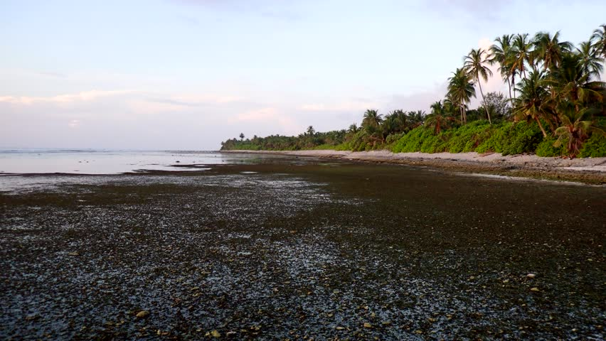 Littoral zone at low tide
