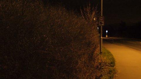 Tilt up to Dead Fox on Road. England