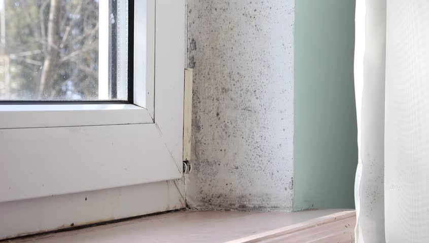 Damp and mould growth problem around a window. Condensate dampness black mold on window, walls and curtains