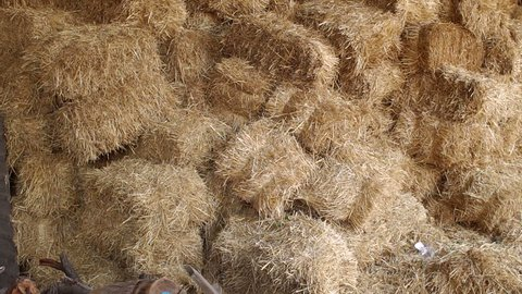 Large haystack in the barn on the farm. Haystacks in warehouse storage. Close-up of hay stacks. Agriculture warehouse. Haystacks in hangar.