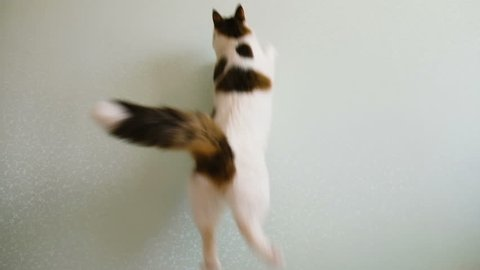 Cat jumps behind the sunlight on the wall slow motion