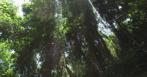 Walking Through Leaves And Trees Of Amazonian Rainforest Tropical Jungle Brazil