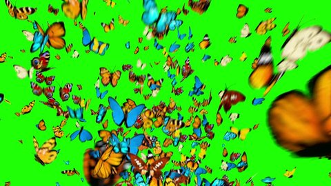 Butterflies Fly Up on a Green Background. 3d animation, 4K