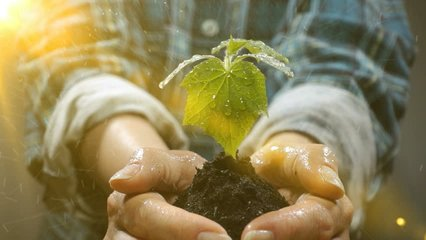 Handful of Soil with Young Plant Growing. Concept and symbol of growth, care, sustainability, protecting the earth, ecology and green environment. female hands.Video loop