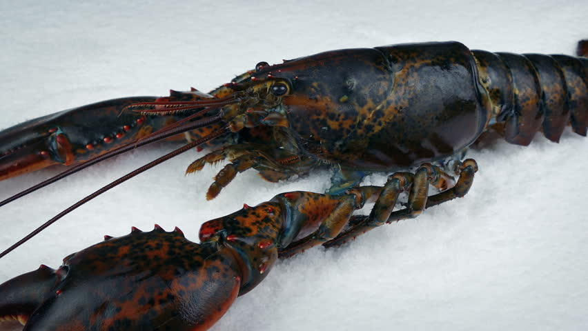 Header of lobster