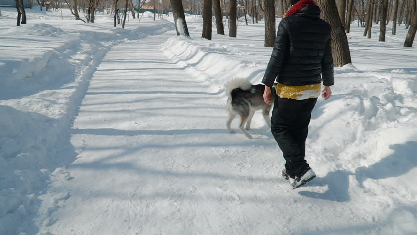 Beautiful girl playing with malamute dog on the snow outdoors in slow motion. Running the snowpath in the park.