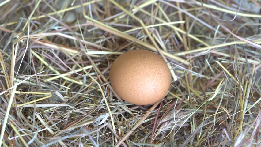 Eco Eggs in the nest. Dolly shot of hens eggs in a nest