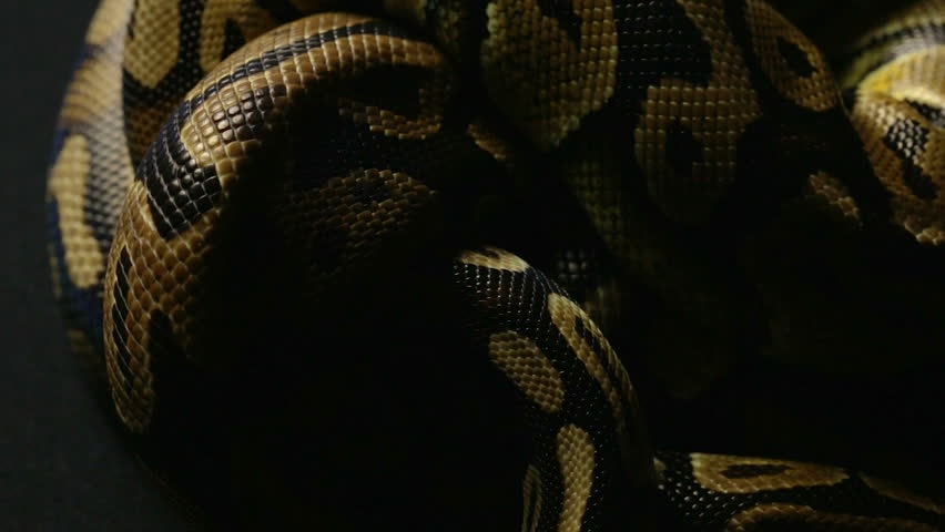 Pattern of python's snakeskin in knot