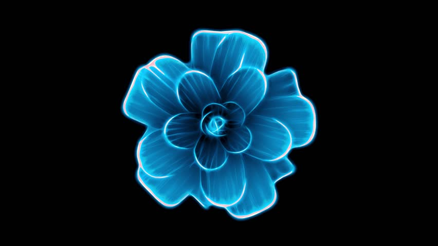opening long blooming blue flower time-lapse 3d animation isolated on background new quality beautiful holiday natural floral cool nice 4k video footage