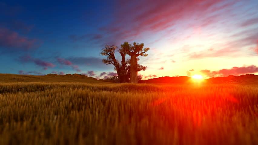 Baobab Tree On African Landscape At Sunset