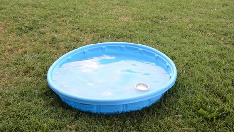 Texas Heeler puppy jumping into a kiddie pool with a silver bowl and switching it to another