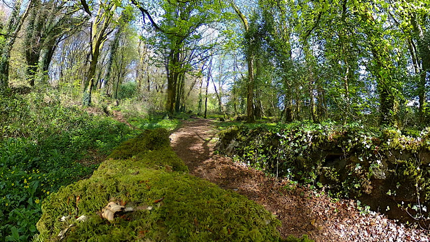 A 360 panorama taken from a mossy stone bridge in an old forest.