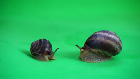 Snails on the green screen