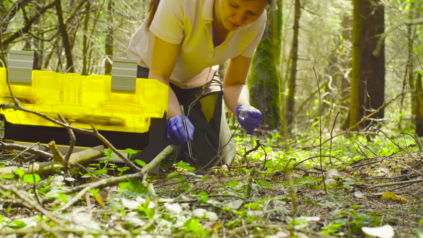 Close up. Scientist ecologist in the forest opening toolbox, then taking samples of the last year's needles with tweezers and putting them in a test-tube. | Shutterstock HD Video #1010649617