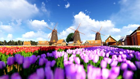 Traditional Dutch Windmills With Vibrant Tulips In The Foreground Over Blue Sky