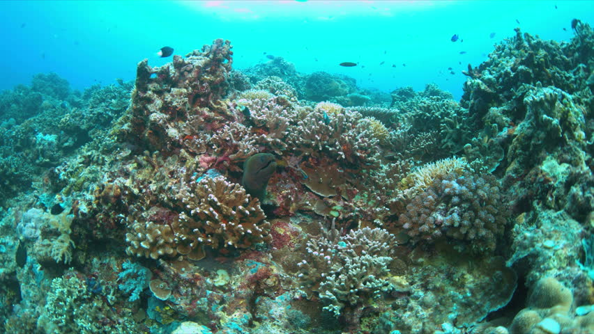 Coral Reef Underwater Marine Life On A Shallow Ocean Floor ...