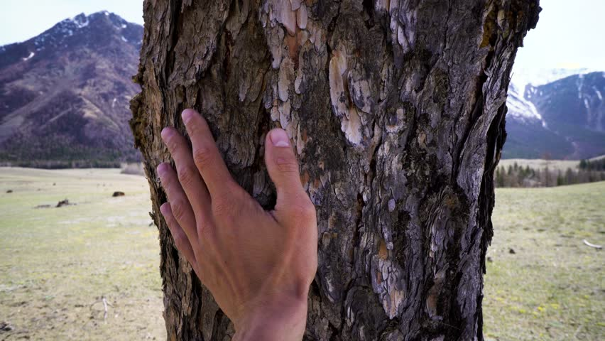 Human hand touching tree trunk against the snow-capped mountains, closeup