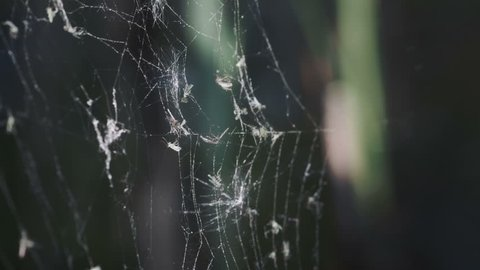 Sparse spiderweb at the lake. Video footage of light spiderweb on dark background.