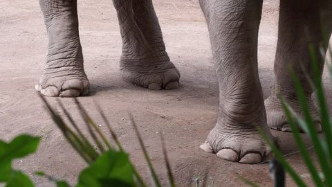 detail of elephant's paws in a city zoo