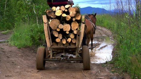 Transport wood with horse cart