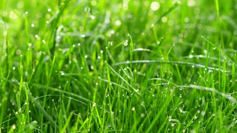 Blurred grass background with water drops. 4K shot with motorized slider.