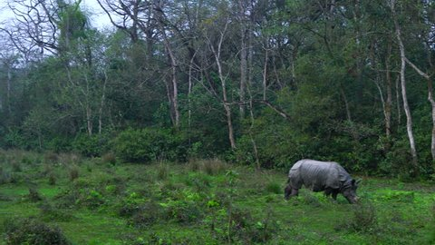 Indian rhinoceros, Royal Chitwan National Park, Nepal, Asia