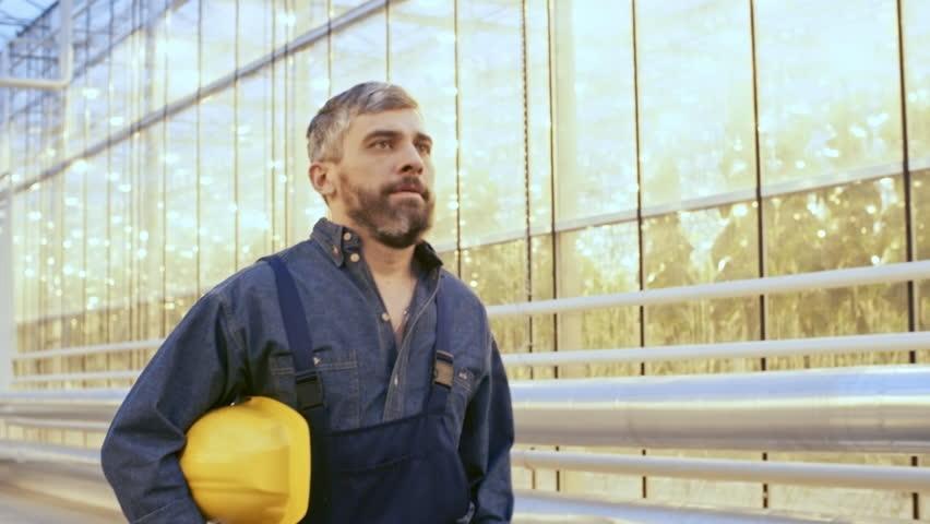 Medium shot of bearded mature man in overalls putting on yellow hard hat when walking along industrial greenhouse hallway, follow shot
