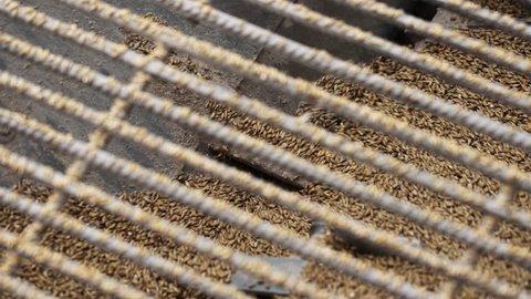 Farm factory processes. Crushed brown grain mills in modern milling apparatus through metal lattice