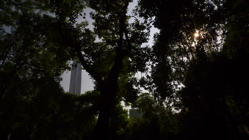 day time shenzhen city famous ifc building park slow motion tree view 4k china
