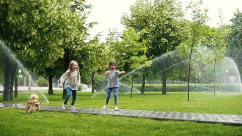 girls playing with the dog at the park lawn with pouring sprinklers