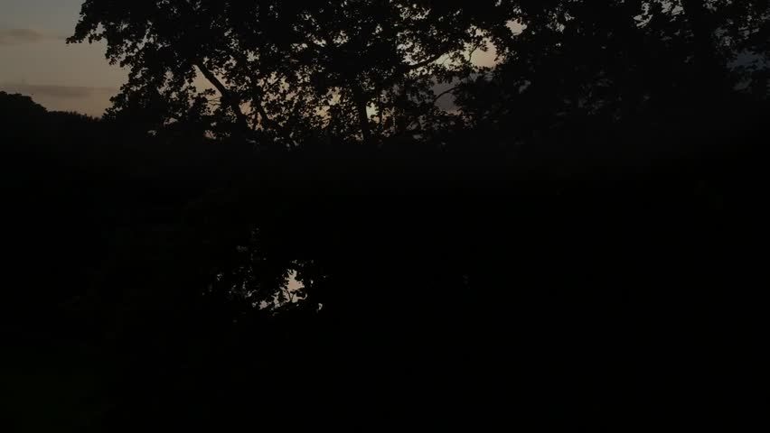 Reveal the sunset behind a tree over the lake. | Shutterstock HD Video #1012420067