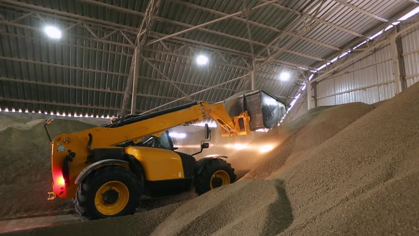 Huge storage facility of agricultural crops. Telescopic handler with ladle working at covered bulk stock. Telehandler with grab processing grain at mill storehouse. Agro logistics concept.