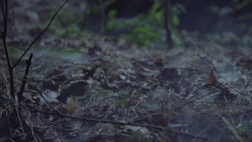 Creepy foot walking through forest