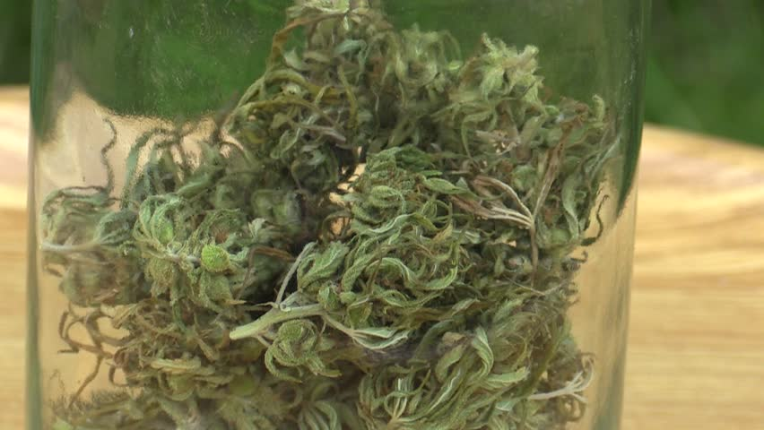 Medicinal cannabis hemp harvested dried a glass of seeds quality for the production of ointments and creams developed by scientists, science modern trend, seeds big bud with pistils, stigmas, Europe