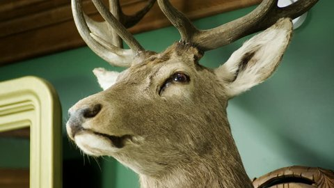 Hunter trophy. Stuffed animal hanging on the wall. Deer's head.